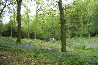 bluebell trail Lickey 14-5-06 [4]