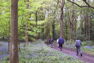 bluebell trail Lickey 14-5-06 [6]