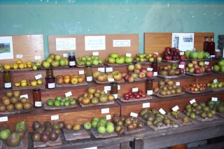 castle Bromwich apple day 2006 [3]