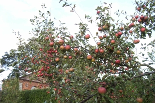 castle Bromwich apple day 2006 [4]